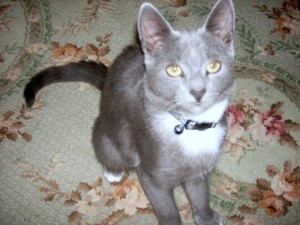 Whisper is a feral that was rescued by Heronbank rescue