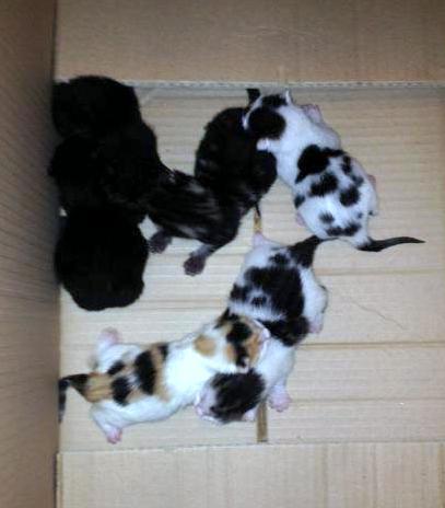 Tabby's kittens