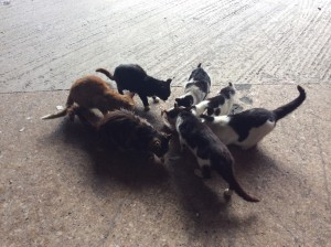 Some ferals at a local industrial area tucking into some food from the rescue,