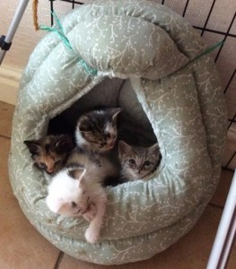 kittens close up
