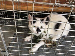 feral-kitten-in-netting
